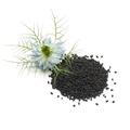 Heap of black nigella seeds and flower - PhotoDune Item for Sale
