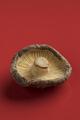 Single dried shiitake mushroom - PhotoDune Item for Sale
