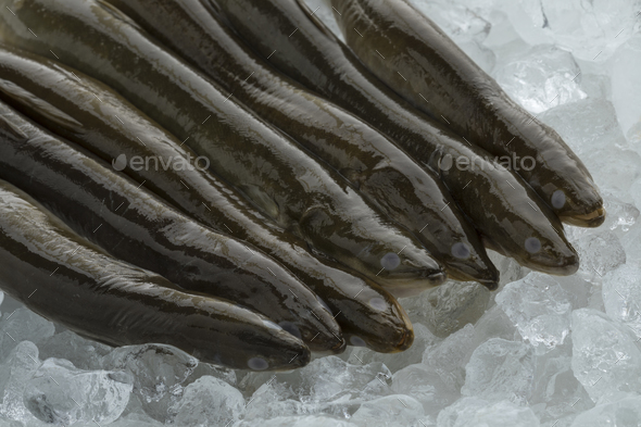 Fresh raw eels on ice - Stock Photo - Images
