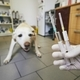 Sick dog in animal hospital - PhotoDune Item for Sale