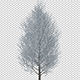 Growing Tree With Gray Leaves - VideoHive Item for Sale