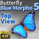 Butterfly Blue Morpho 5 - VideoHive Item for Sale