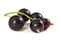 Black currant on stem isolated on white - PhotoDune Item for Sale