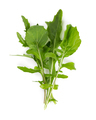 Fresh arugula leaves isolated on white