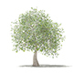 Olive Tree with Fruits 3D Model 3.9m