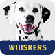 Whiskers - Pets Store | Vet Clinic | Animal Adoption - ThemeForest Item for Sale