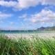Beach Lofoten Archipelago Islands Beach - VideoHive Item for Sale