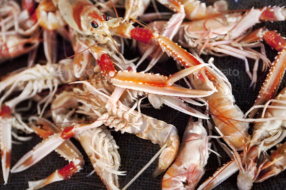 Background of scampi - Stock Photo - Images