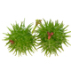 Castor bean on (Two balls) white background. - PhotoDune Item for Sale