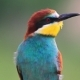 Colorful Wild Bird with a Curious Look - VideoHive Item for Sale
