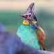 Exotic Wild Bird Holds a Large Butterfly in a Beak - VideoHive Item for Sale
