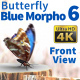 Butterfly Blue Morpho 6 - VideoHive Item for Sale