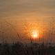 Wild grass in the morning sunrise - PhotoDune Item for Sale