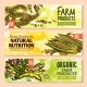 Vector Banners of Farm Grown Grain and Cereals - GraphicRiver Item for Sale
