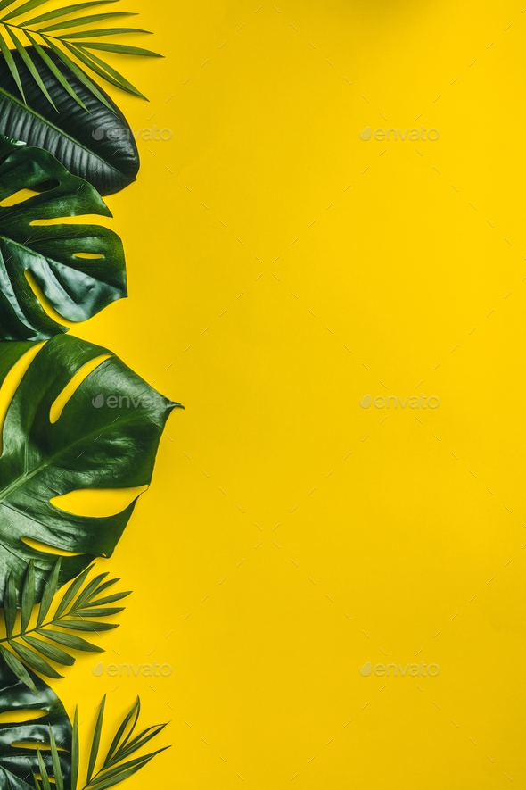 Tropical Leaves On Yellow Background Stock Photo By Klenova Photodune Green leaf on white sand during daytime. https photodune net item tropical leaves on yellow background 22326846