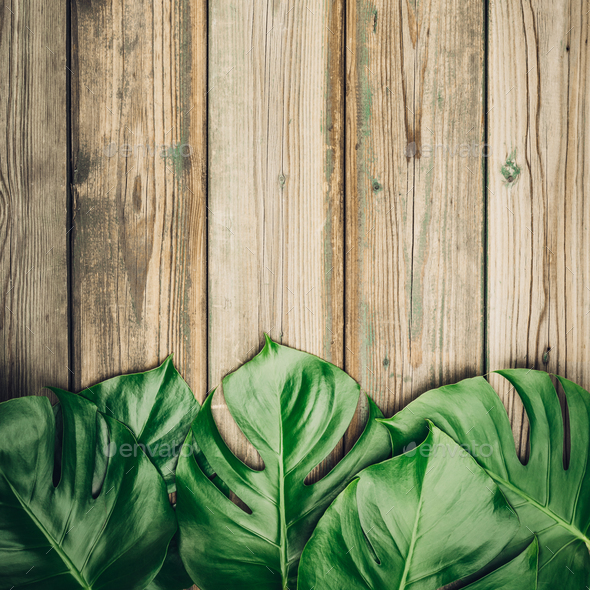 Tropical monstera leaves on wooden background - Stock Photo - Images