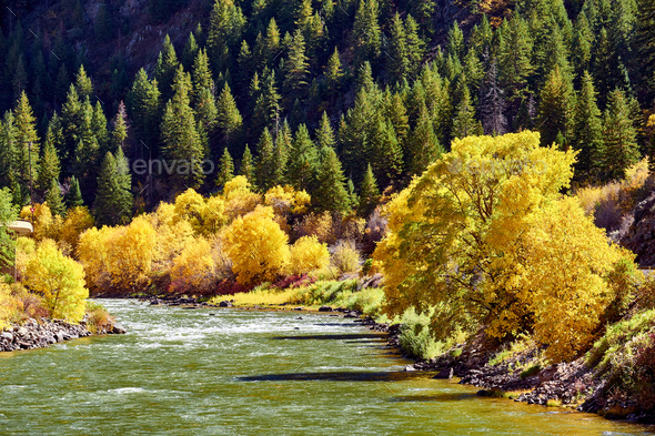Landscape with autumn trees and river - Stock Photo - Images