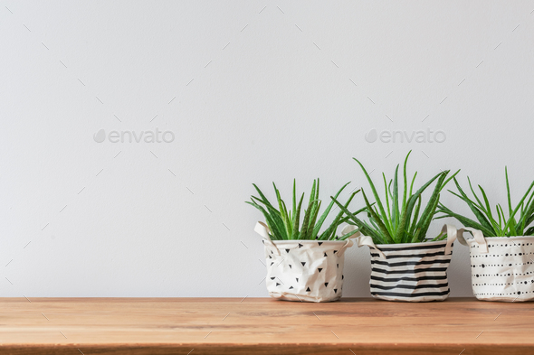 Plants on empty wall - Stock Photo - Images