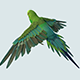 Parakeet Bird - 3DOcean Item for Sale