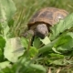 Turtle Eating - VideoHive Item for Sale