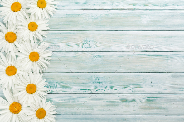 Garden chamomile flowers on wooden background - Stock Photo - Images