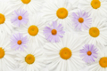 Garden chamomile flowers on wooden background - PhotoDune Item for Sale