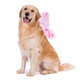 Golden Retriever with butterfly wings - PhotoDune Item for Sale