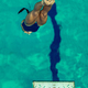 Female diver jumping into the pool - PhotoDune Item for Sale