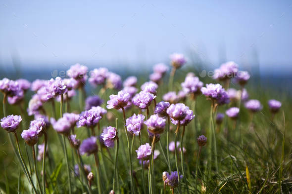 Pink eyelets on grass - Stock Photo - Images