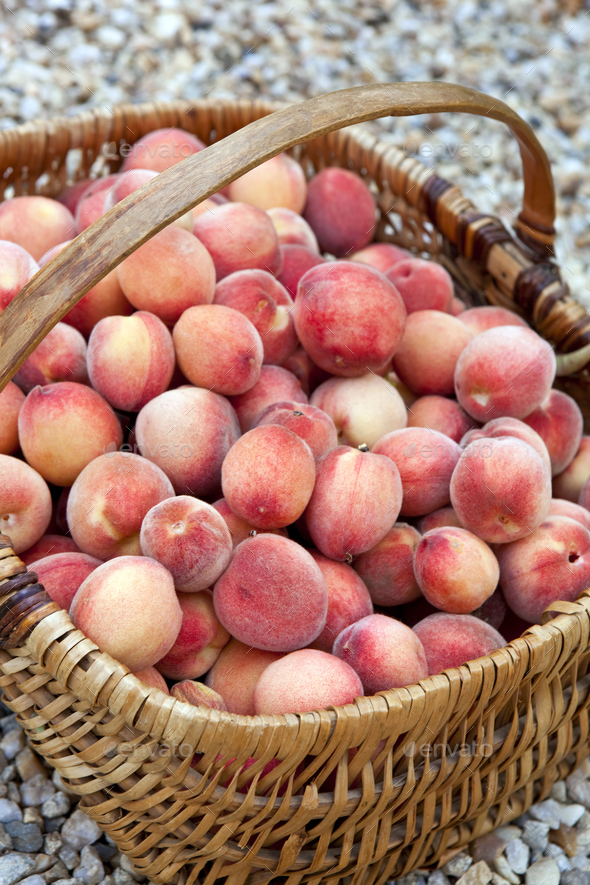 Harvest of peaches - Stock Photo - Images