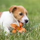 Pet dog happy puppy chewing a flower - web banner idea - PhotoDune Item for Sale
