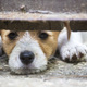Cute dog puppy looking behind a fence - PhotoDune Item for Sale