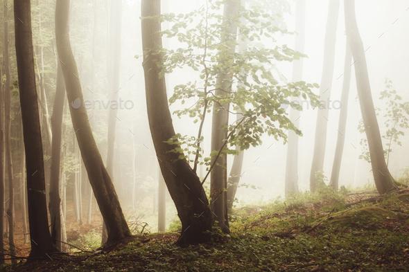 Misty woods with strange light - Stock Photo - Images