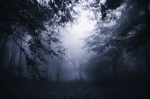Dark haunted Halloween forest at night - Stock Photo - Images