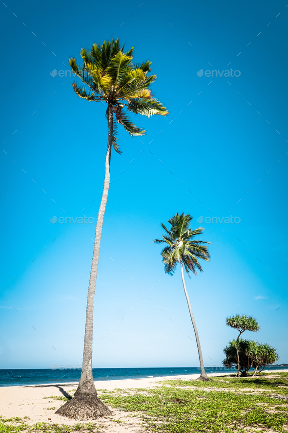 Amazing tropical beach landscape with palm trees - Stock Photo - Images