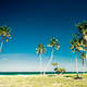 Amazing tropical beach landscape with palm trees - PhotoDune Item for Sale