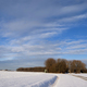 Winter landscape in the Biesbosch - PhotoDune Item for Sale