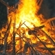 Big Campfire From Branches Burn at Night in the Forest - VideoHive Item for Sale