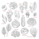 Vector Sketch Icons of Salad Leafy Vegetables - GraphicRiver Item for Sale