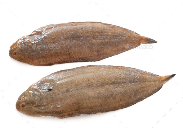 two sole fishes - Stock Photo - Images