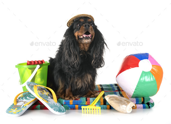 dog in holidays - Stock Photo - Images