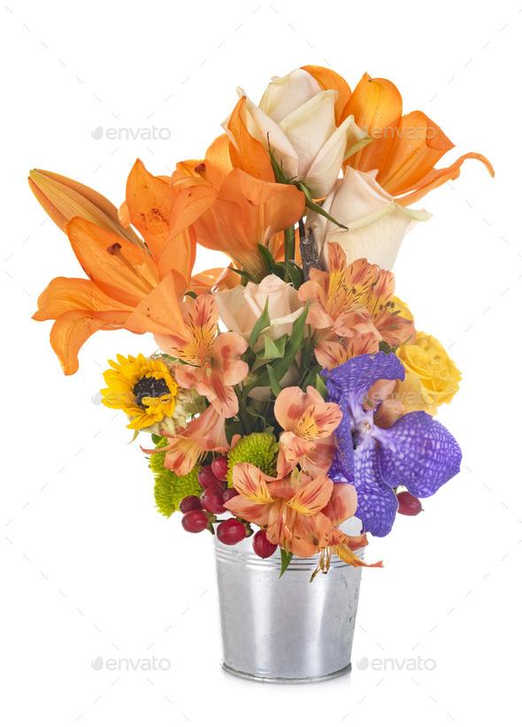 flower in studio - Stock Photo - Images