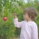 Young Child Tries To Ripe Pomegranate Fruit in the Garden - VideoHive Item for Sale