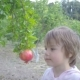A Small Child with Full Force Tries To Tear Off a Pomegranate From a Pomegranate Tree - VideoHive Item for Sale