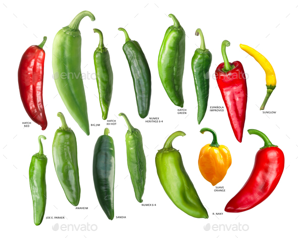 New mexican hatch chiles, paths - Stock Photo - Images