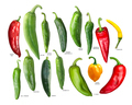 New mexican hatch chiles, paths