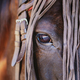 Beautiful horse with amazing glance in the eye - PhotoDune Item for Sale