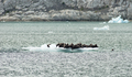 A Group of Wild Seal Lions Huddle Togther on an Iceburg - PhotoDune Item for Sale