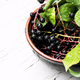 Branch with berries of bird cherry - PhotoDune Item for Sale