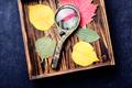Pressed dried herbarium - PhotoDune Item for Sale